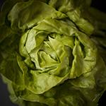 C_Salade-02